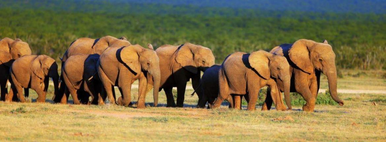 SUDAFRICA, SAFARI & PLAYAS 11 NOVIEMBRE 2018